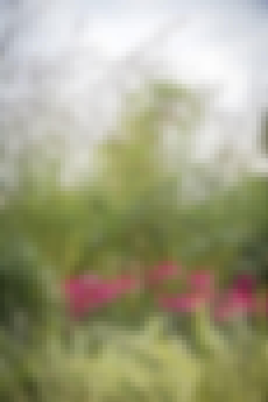 Planter i den vilde græshave