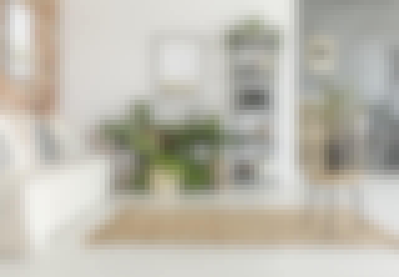 Stueplanter: de allerbedste planter til din stue