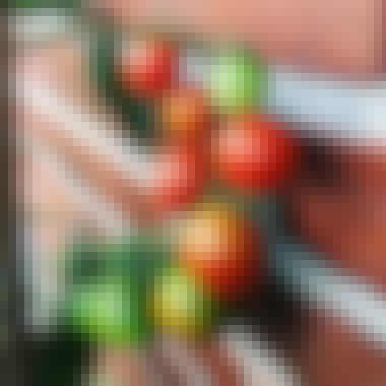 Røde tomater kan du dyrke på altanen