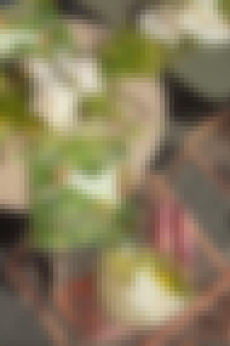 20210623_Costume-Sommerutgave_0046