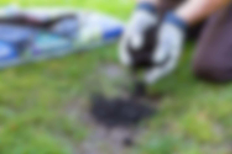 Så får du en perfekt gräsmatta