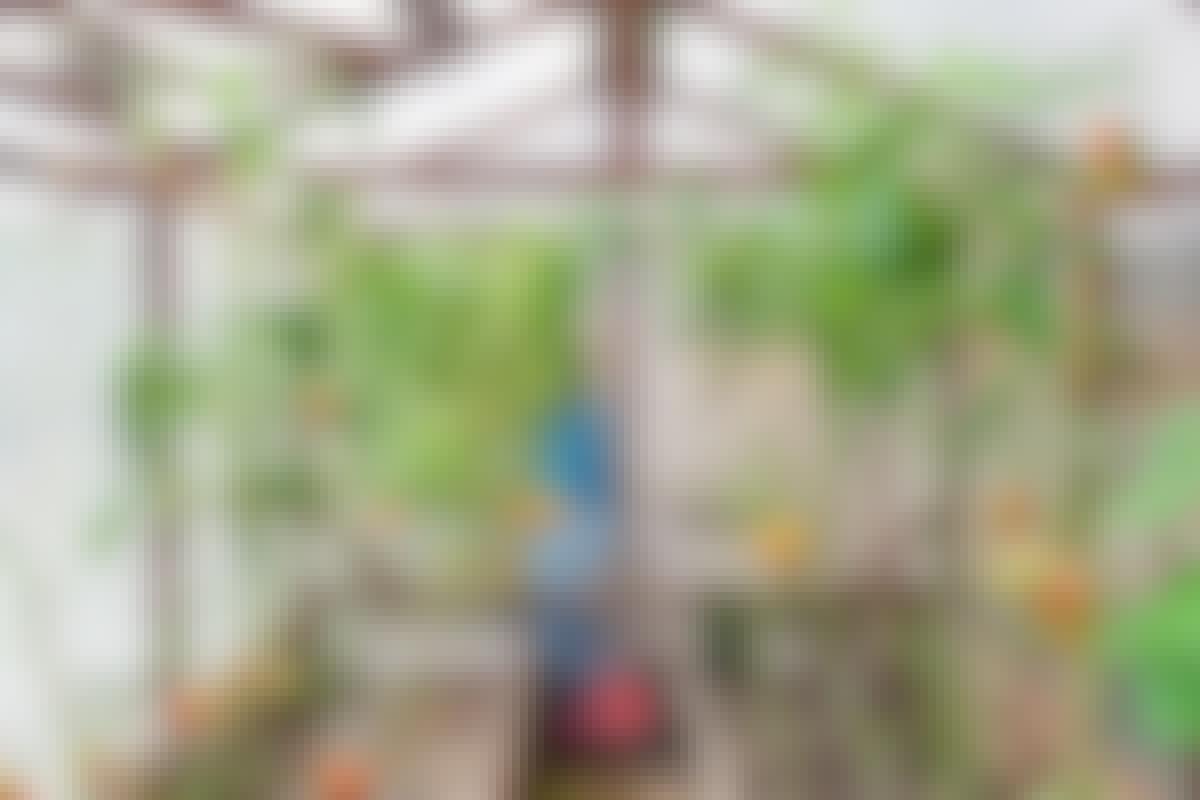 Finn drivhuset som passer til hagen din
