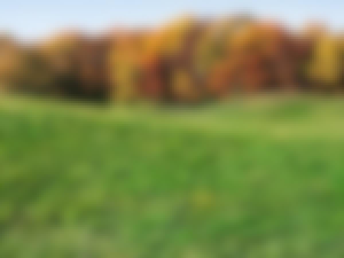 Græsplæne længde efterår