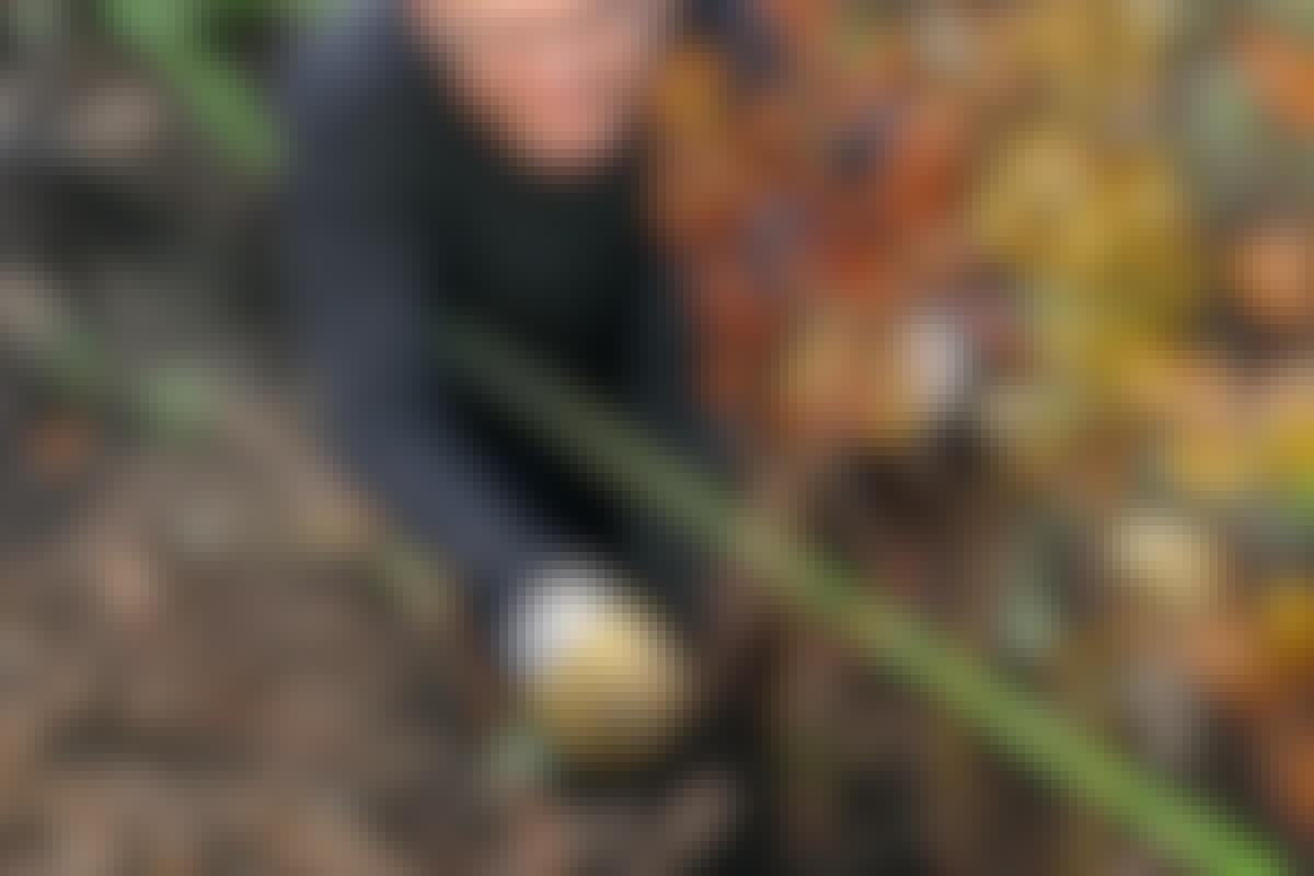 4 VAIHETTA: Istuta tuuhea pensasaita