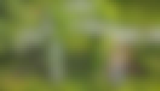 Espalier: Lag en grønn inngangsportal til hagen