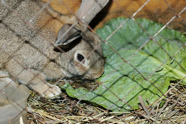 Kaninbur - byg selv et billigt og godt kaninbur | Gør Det Selv