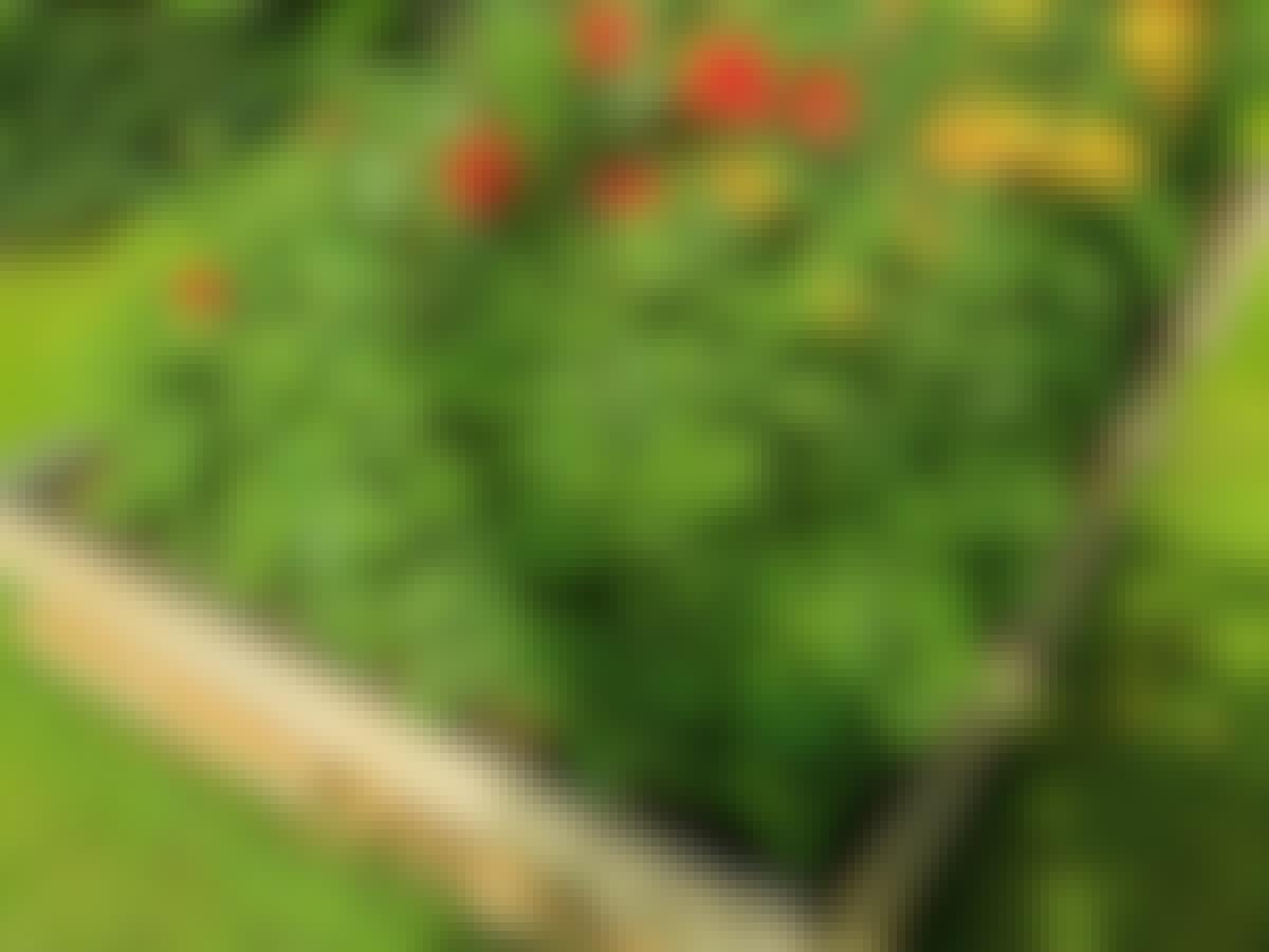 Rakenna itse kasvilavan etanareuna