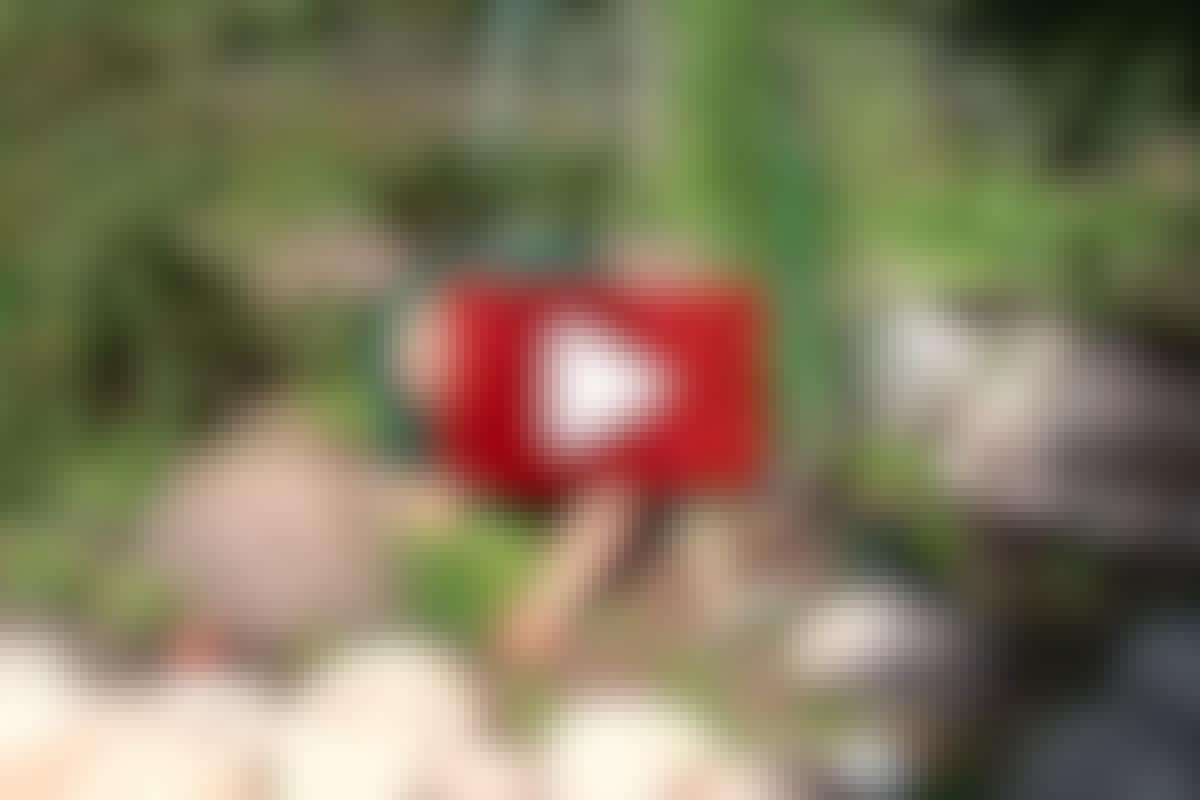 VANN I HAGEN 6: Tilplanting av dam