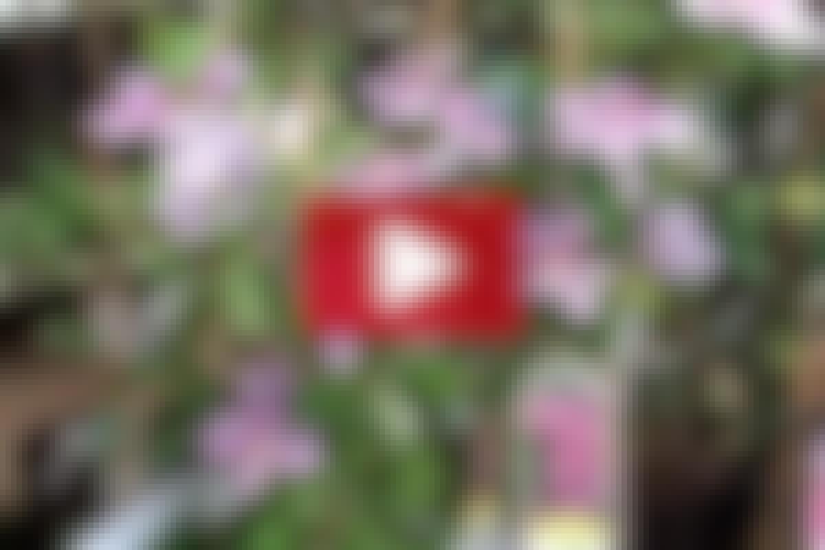 SLYNGPLANTER: 3. Plantevalg