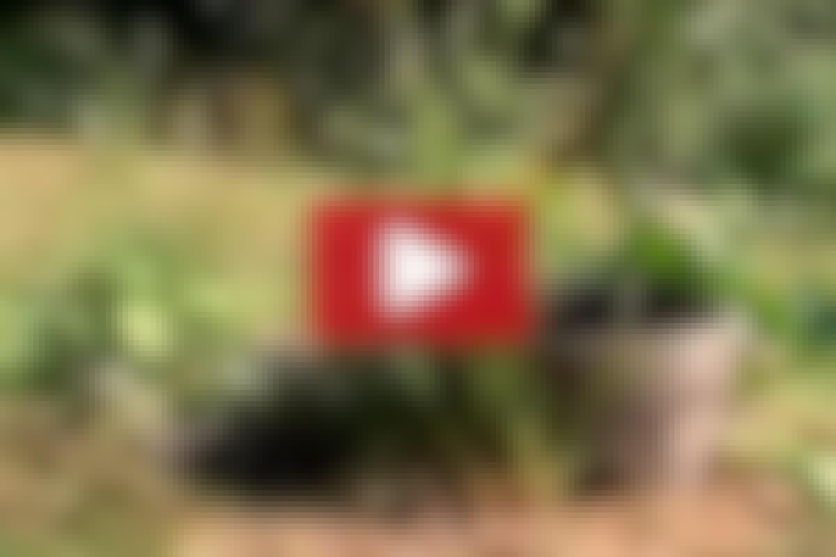 KRUKKER: Lav en lille sød vandkrukkehave