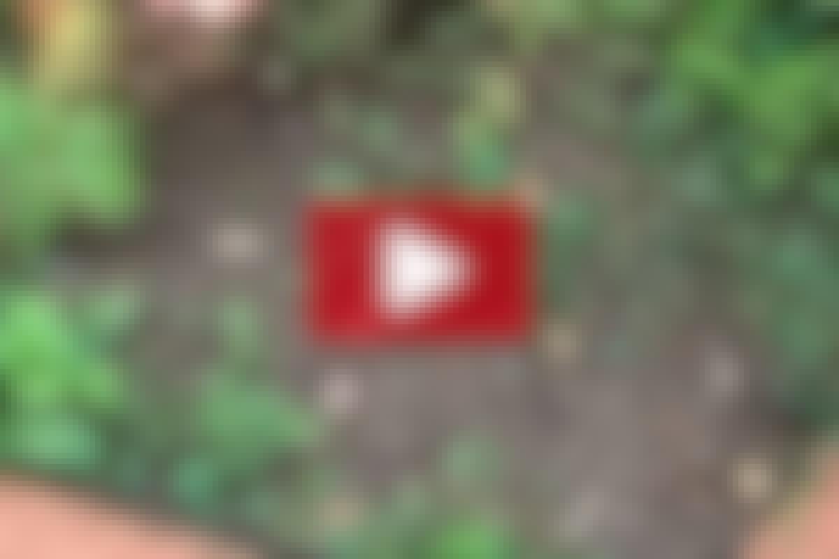 PERENNER: Knäck rotogräset