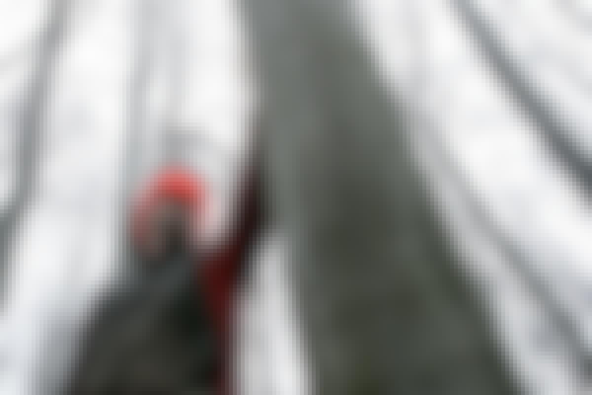 Tänk alltid på säkerheten när du fäller träd. Öva dig på mindre träd innan du fäller ett stort!