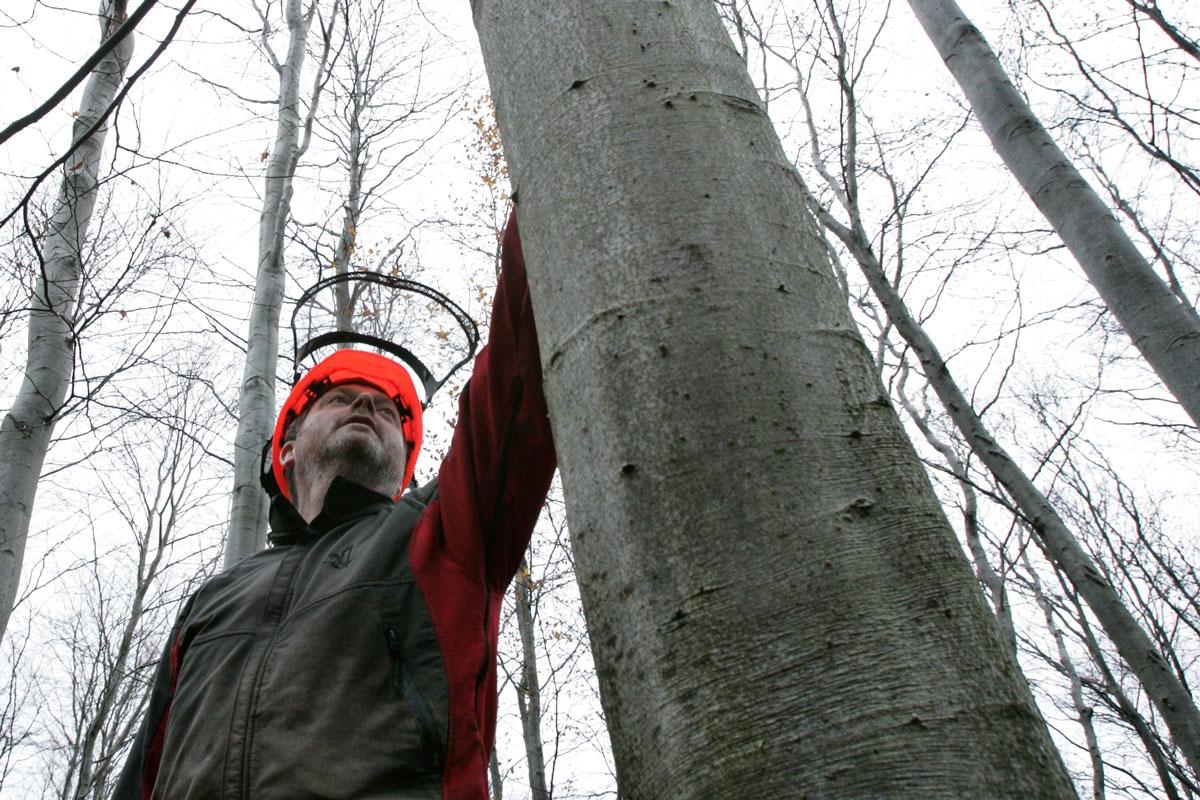 hur binder man upp träd