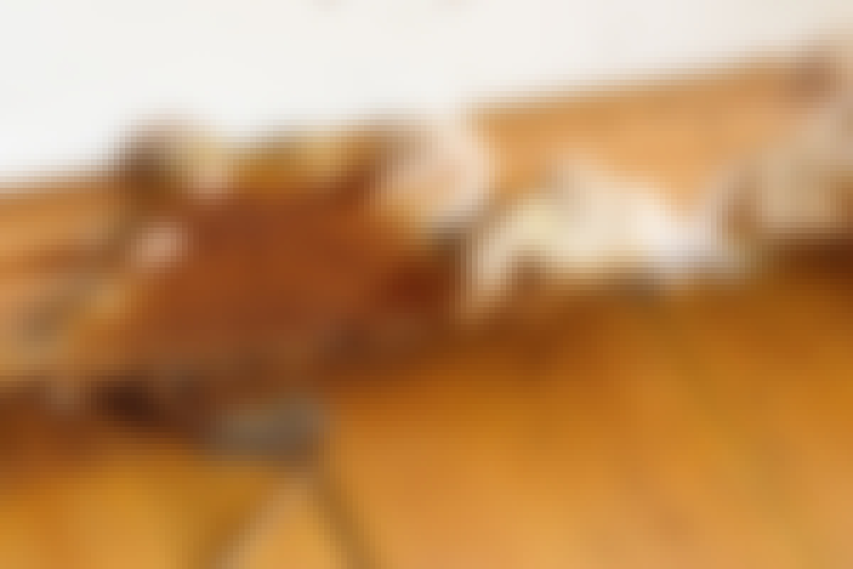 Äkta hussvamp är rödbrun på ytan och har en vit kant när den får ljus.