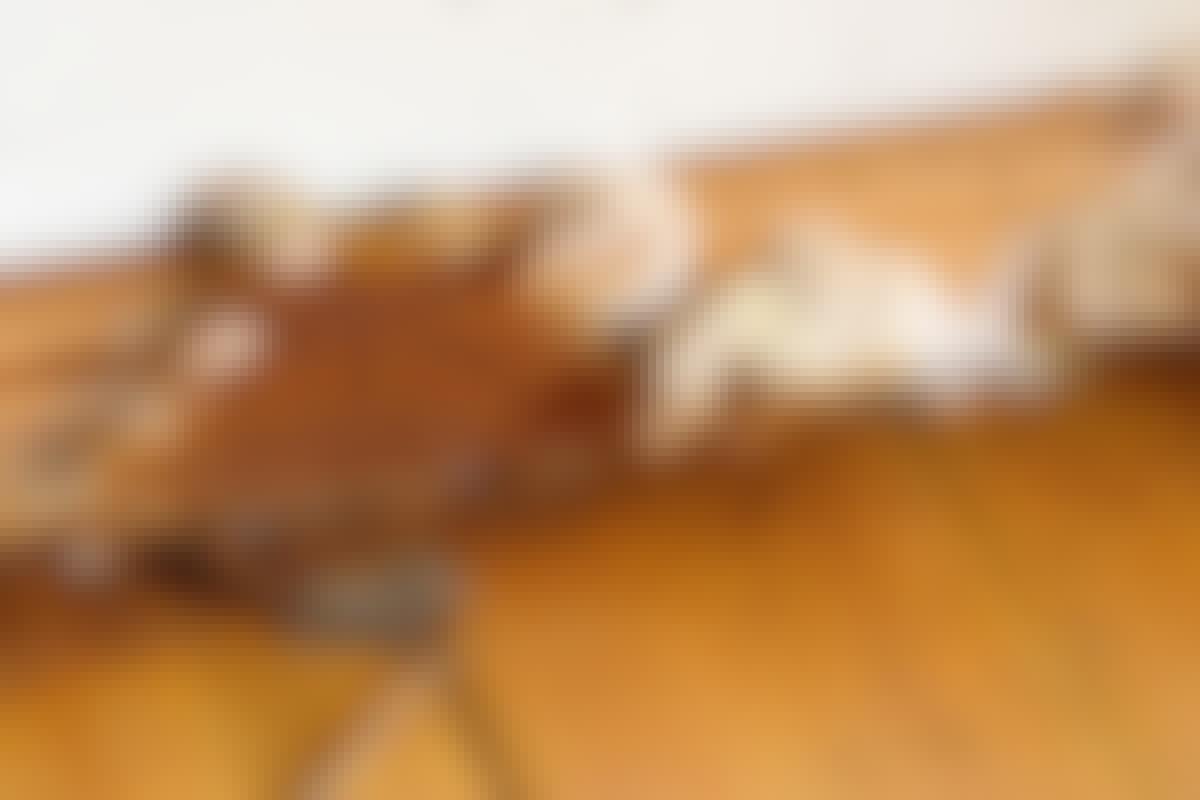 Ægte hussvamp har en rødbrun overflade med en hvid kant, når den får lys.