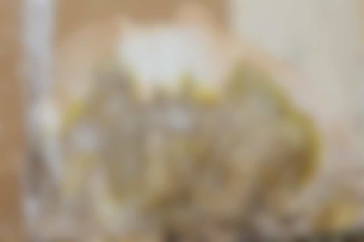 Svampen spreder sig ved hjælp af tynde strenge, der giver den vand og næring.