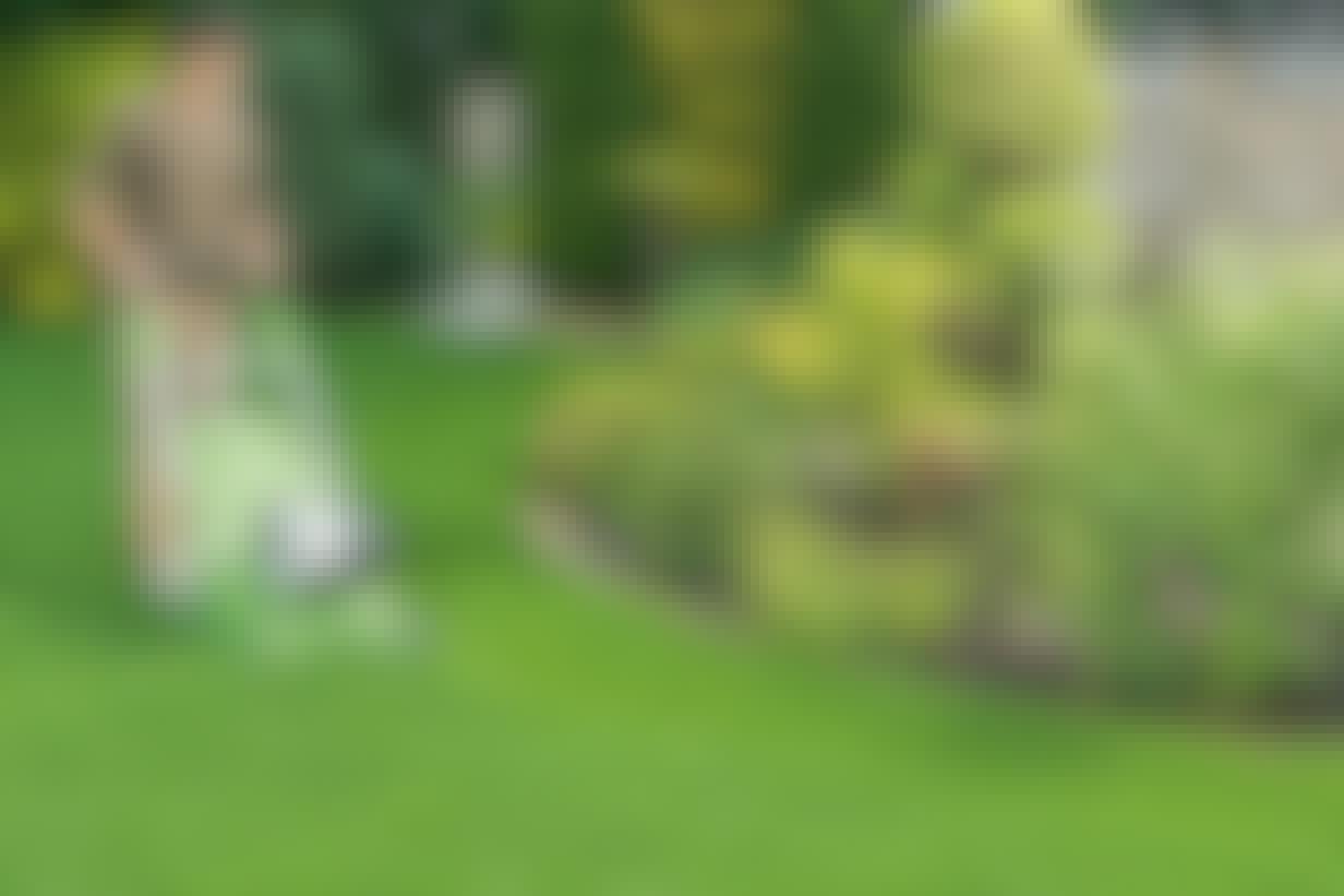 Sådan klipper du græsplænen