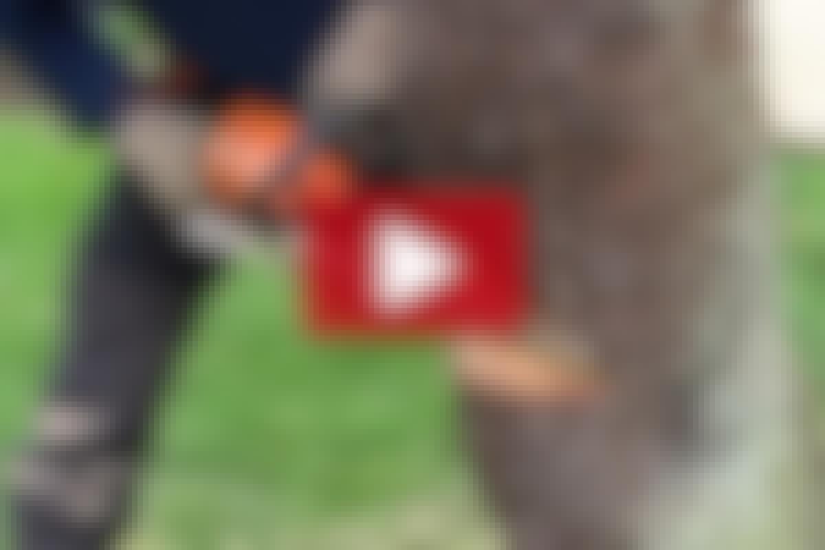 VIDEO: Sikker trefelling