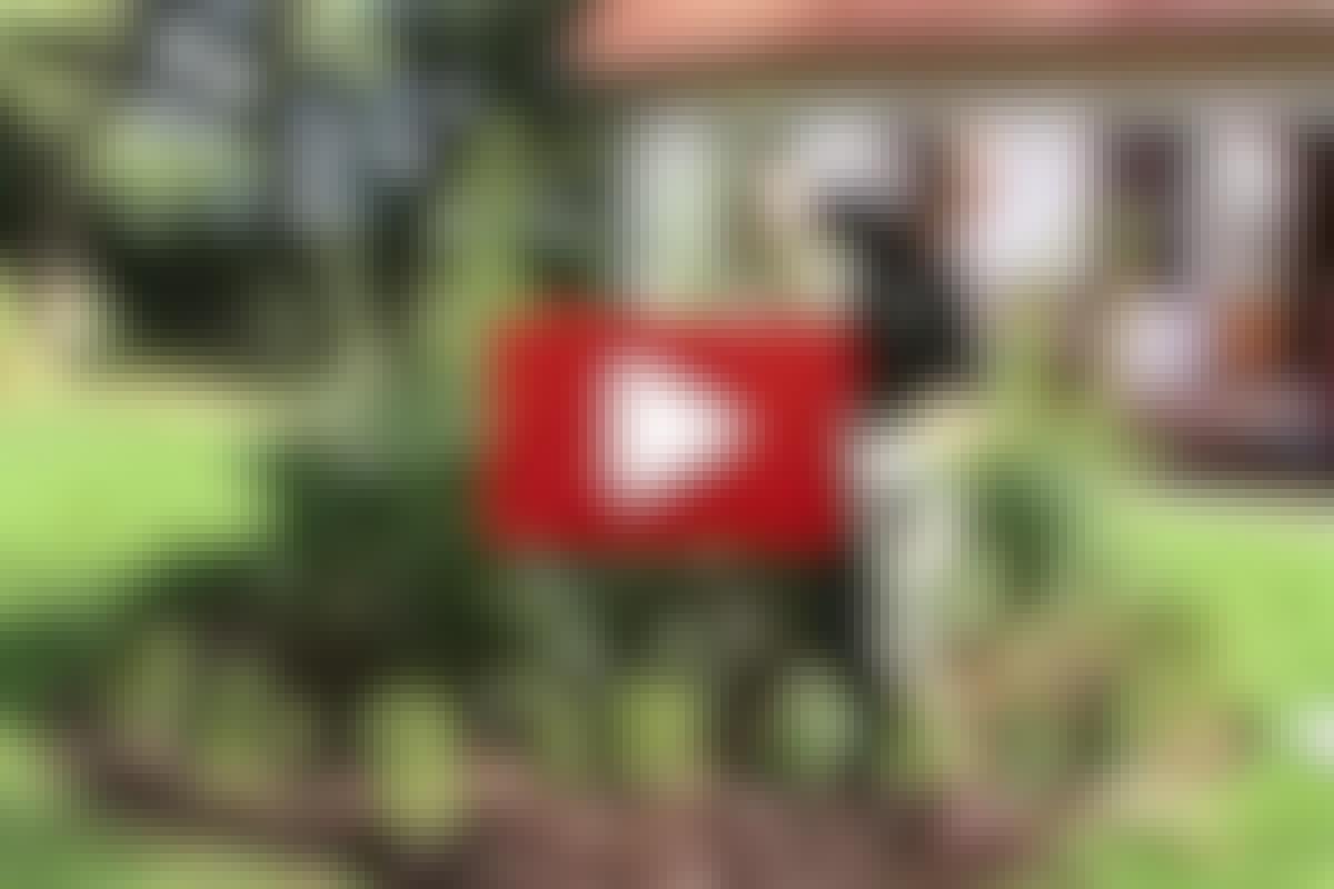 VIDEO: Så slipper du ogräset