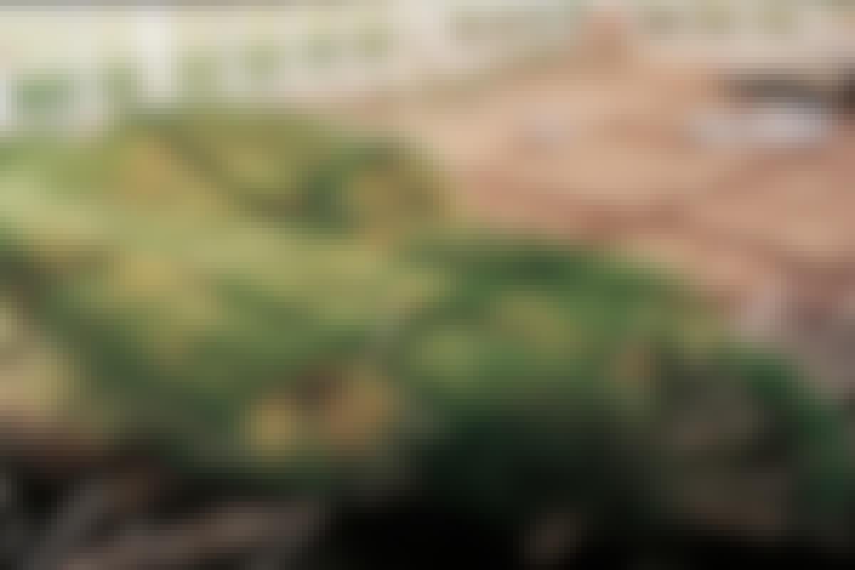 Ferdigplen anlegg gressplen