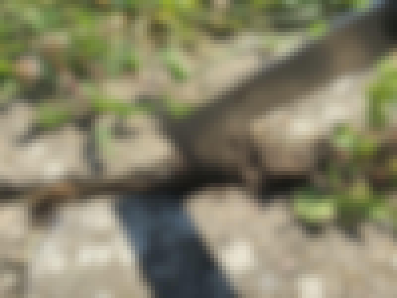 Skrapa upp ogräs mellan stenarna