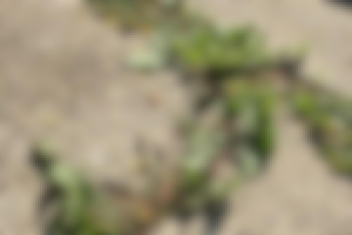 3 kraftfulla VAPEN mot ogräs