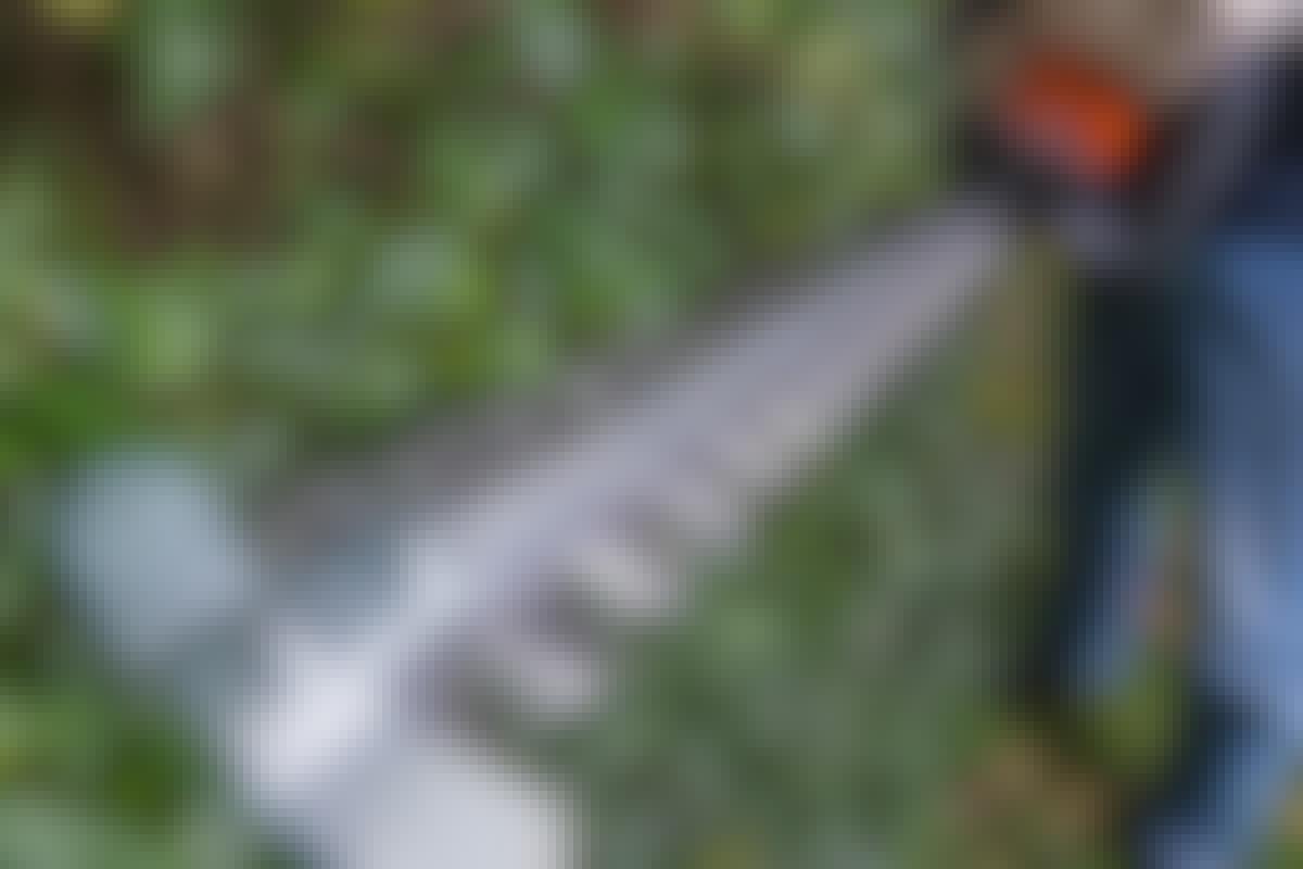 KAUNIS AITA: Tällä sähkötoimisella pensasleikkurilla on paljon helpompaa leikata aita suoraan – tehokkaasti.