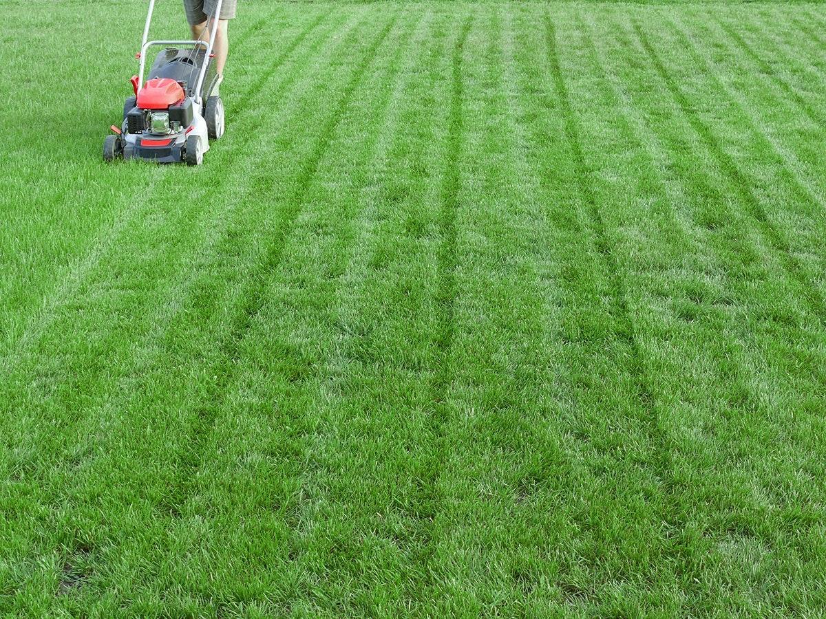billig gødning til græsplænen
