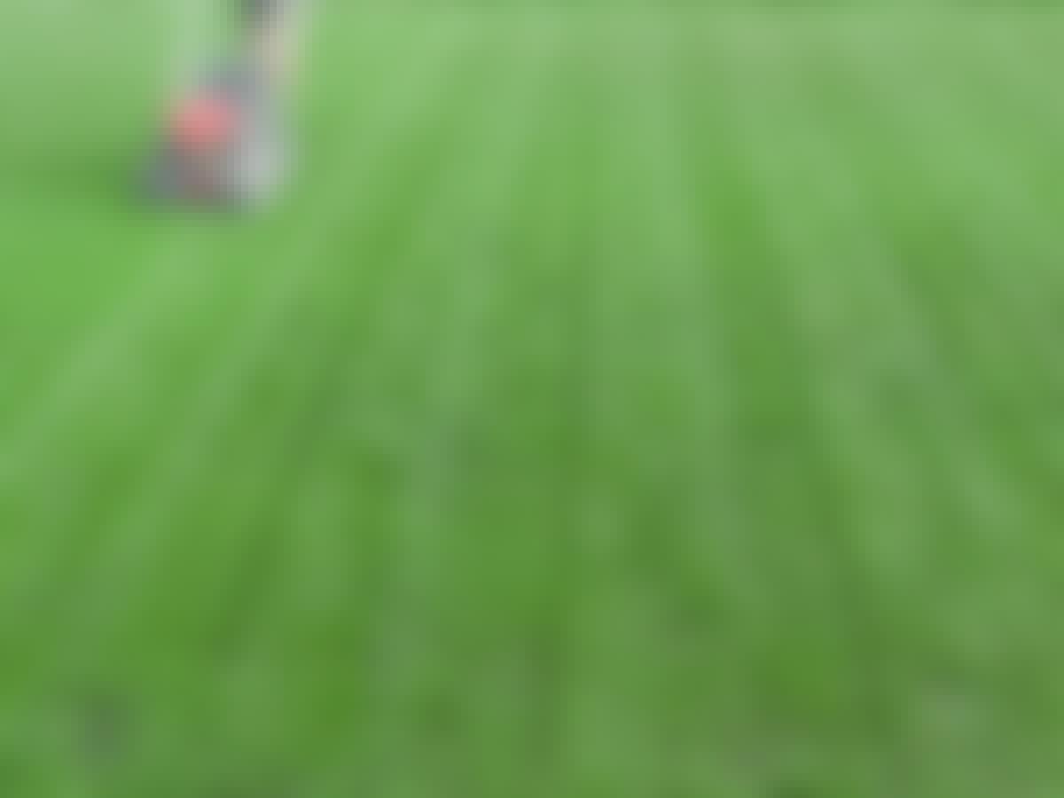 Græsplæne gødning