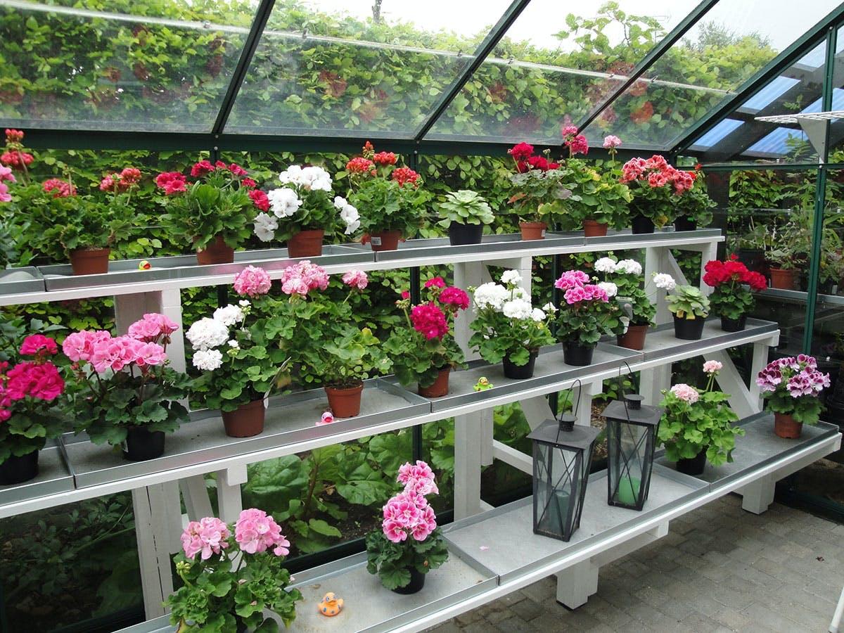 Växthus Läsarnas bästa idéer till växthus Gör Det Själv