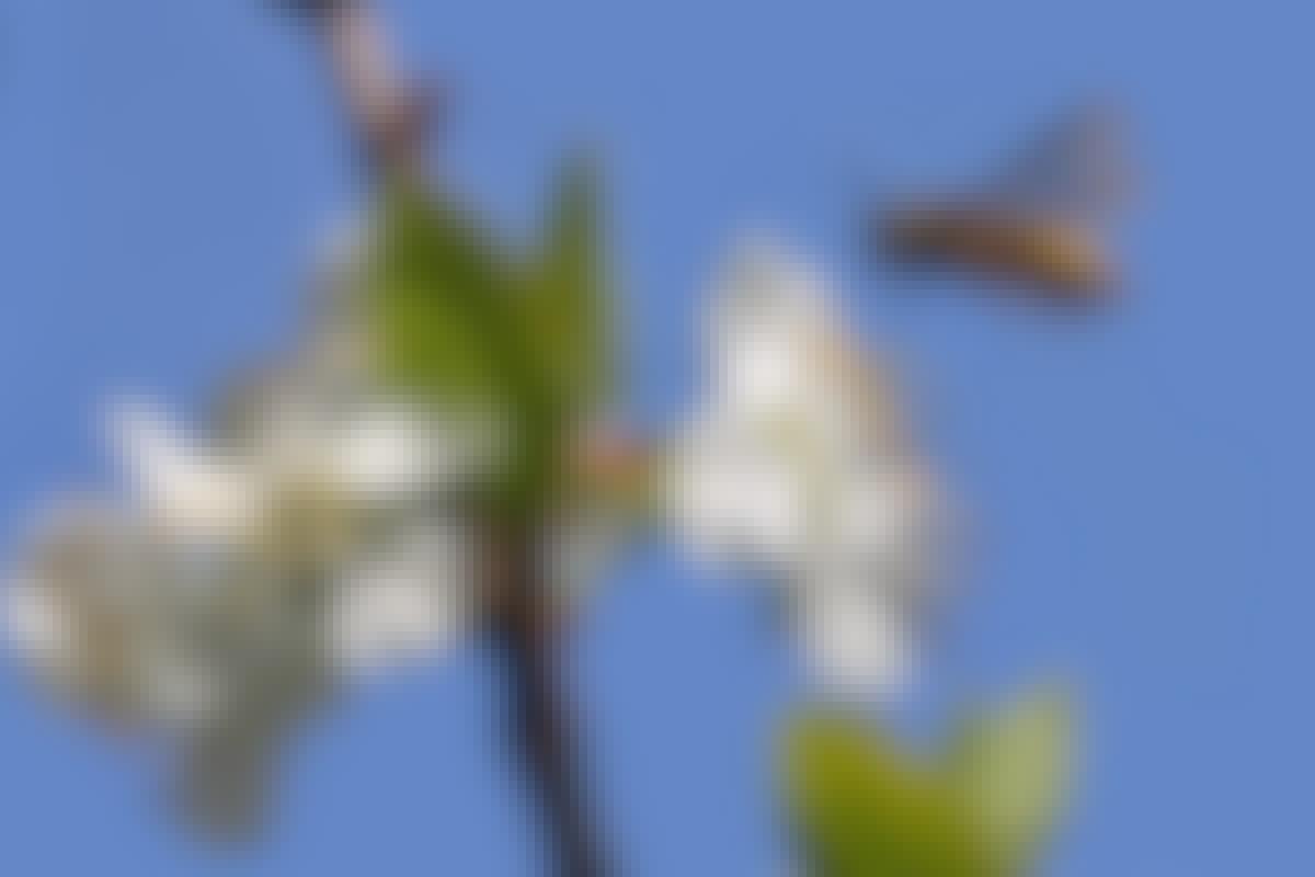Karkota ampiaiset kotoa ja puutarhasta