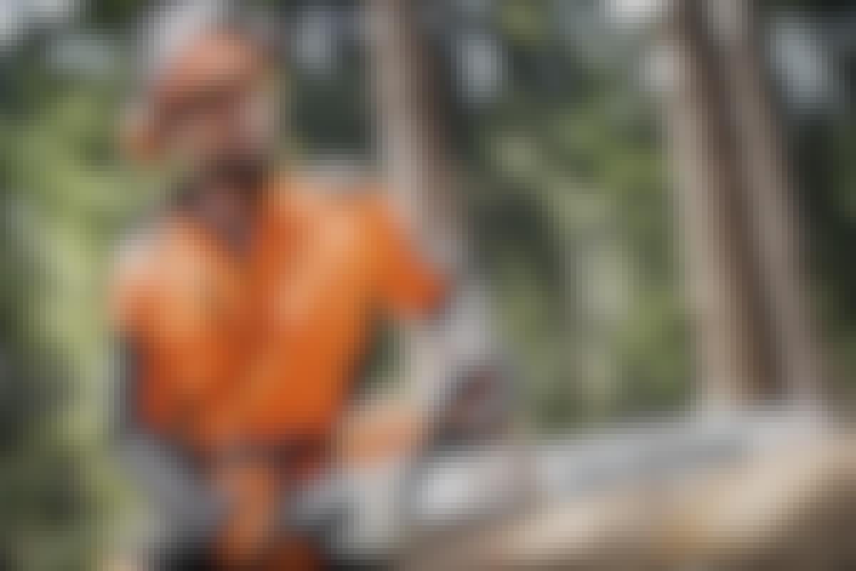 ANNONCE: Sådan fælder du træet – nemt og sikkert