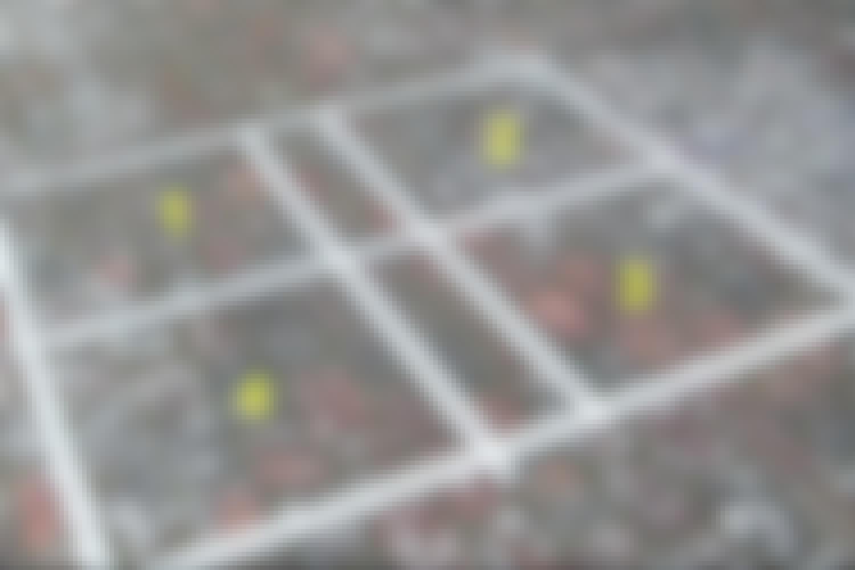 Fire felter blev markeret med malertape. Felterne var 70 x 70 cm og fordelt, så der var masser af flisepest i hvert af dem.   <br> TESTOMRÅDET:  1. Kost og sand  2. Terrassevasker  3. Fliserens  4. Brun sæbe