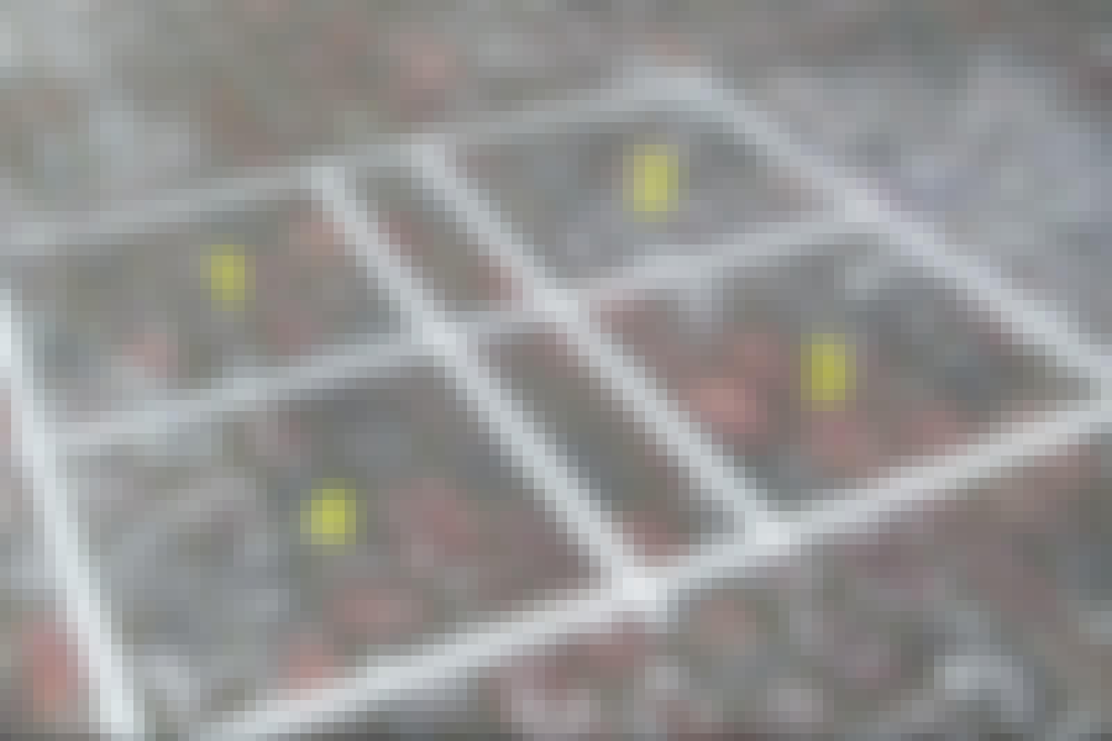 FLISEPEST: De fire felter med flisepest