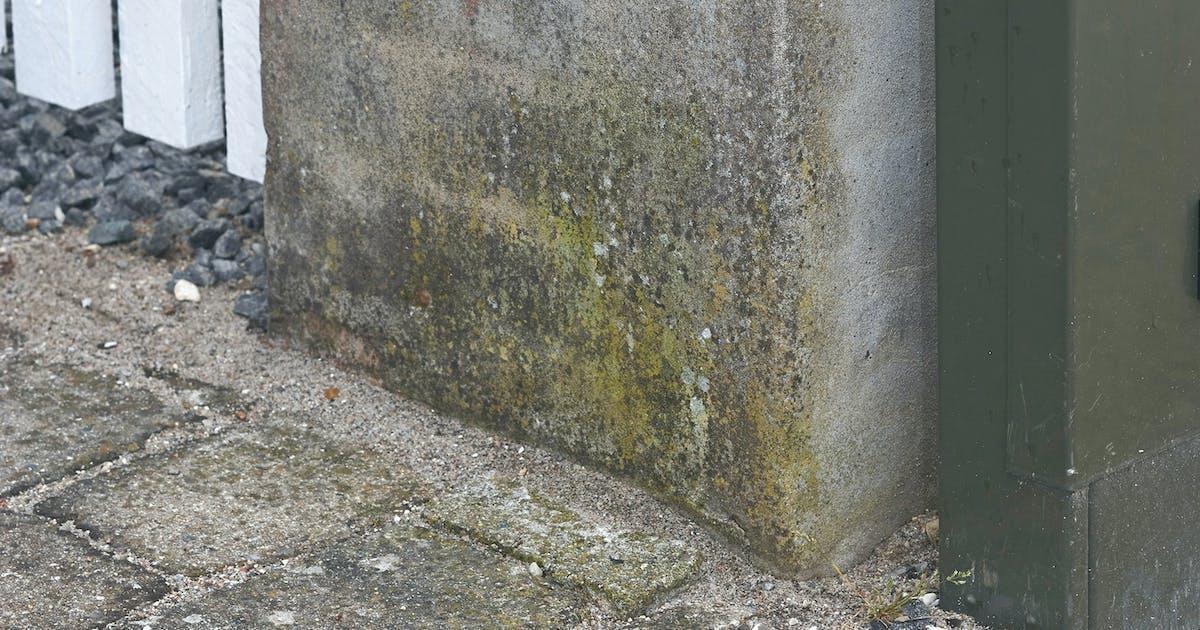 4 trin: Slip af med alger på murværk   Gør Det Selv