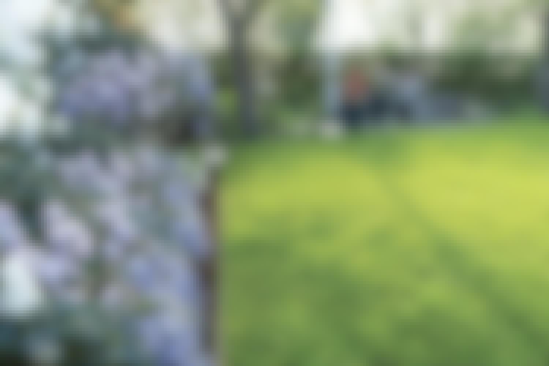 Rajaa nurmikko rautareunuksilla
