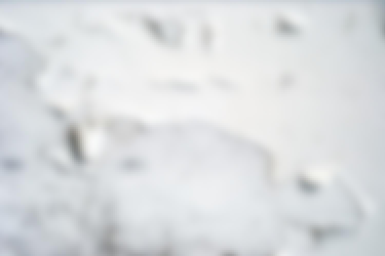 Plamager på murværket