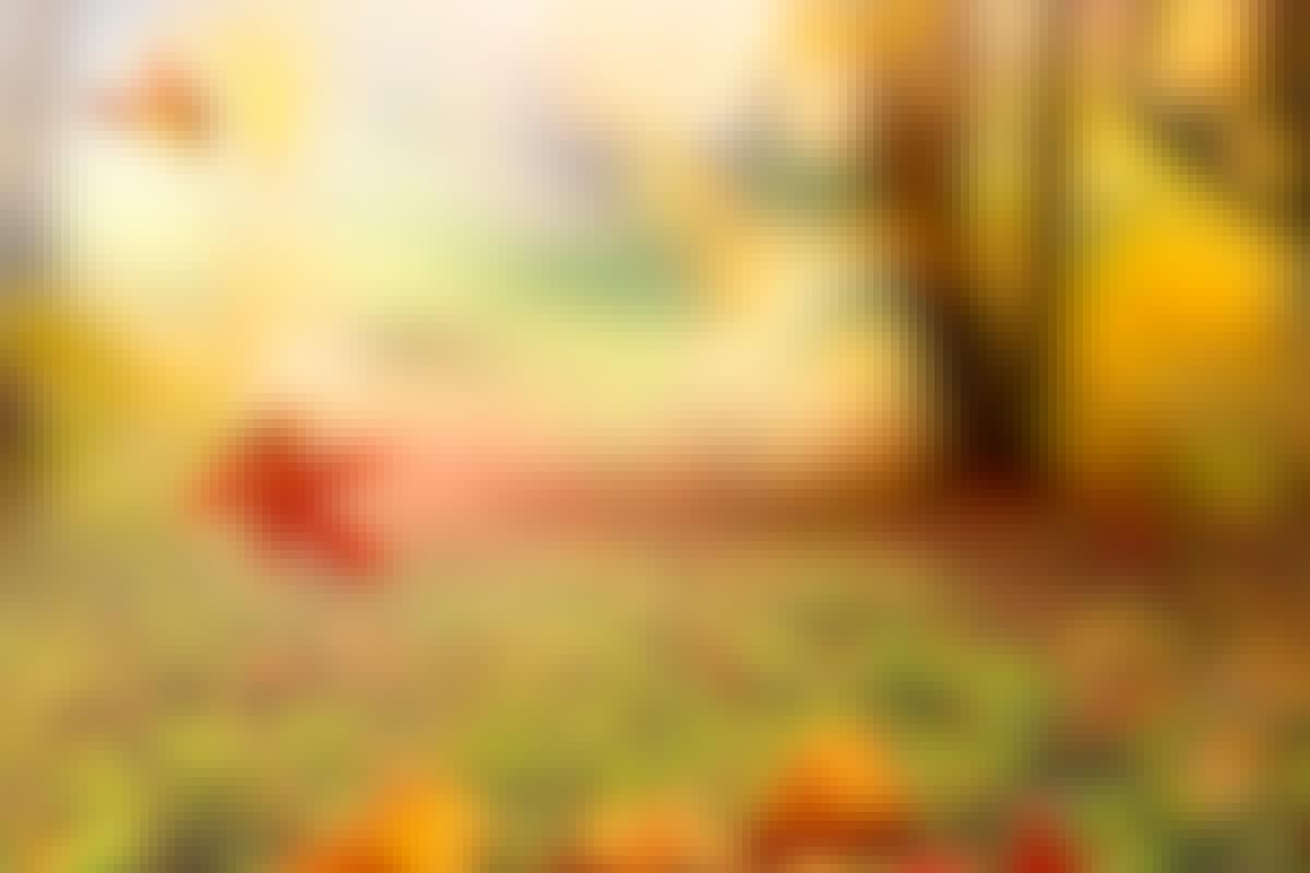 3 TIPS: Återvinn dina nedfallna löv