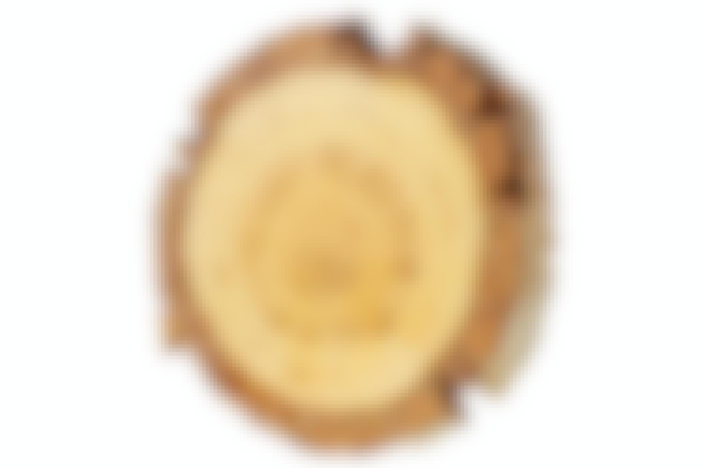 8 hienoa pohjoista puulajia