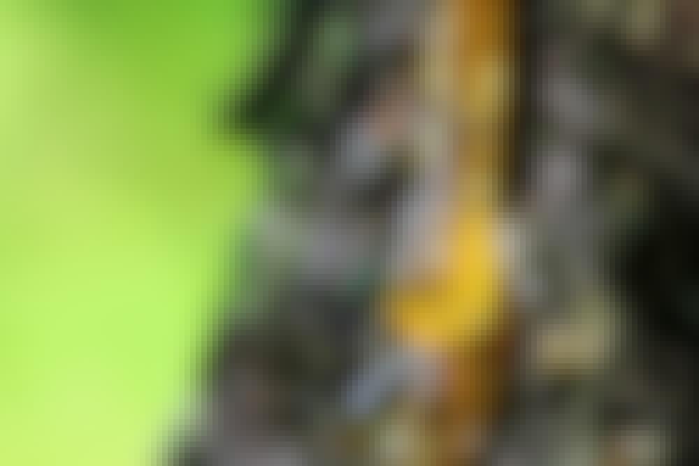 Fjerne harpiks: Sådan kan du bedst fjerne harpiks