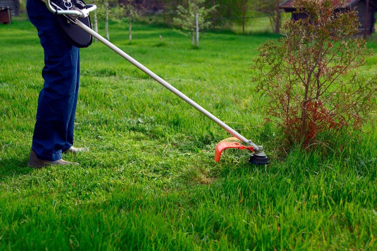 Smuk Græstrimmer - Vælg denne græstrimmer til DIN have! | Gør Det Selv TE-84