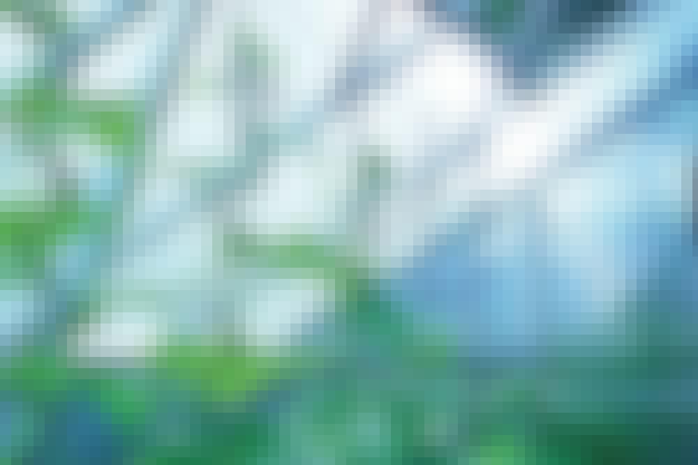 7 hageredskaper du ikke kan unnvære