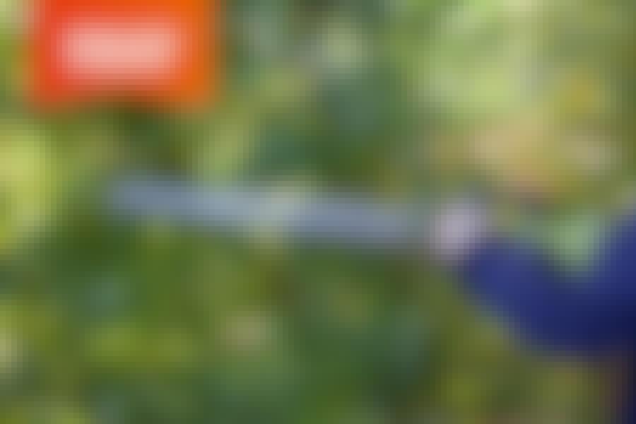 Elektrisk hekksaks: Test av hekksakser med ledning