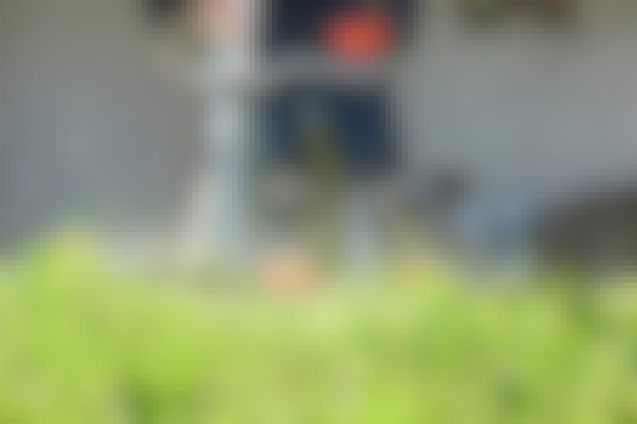 Röjsåg: En röjsåg fungerar också till att trimma kortare gräs, men här går en vanlig grästrimmer på batteri lika bra.
