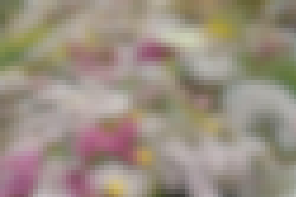 Forskjellige typer planter: Ville blomster