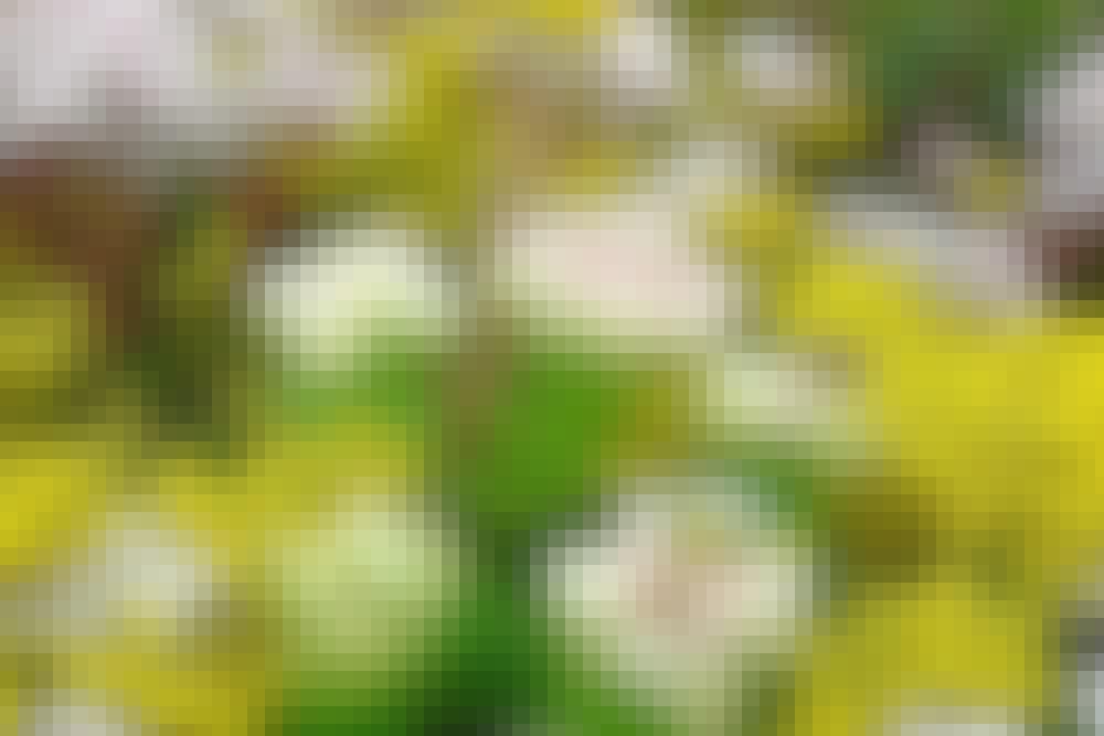 Forskjellige typer planter: Blomster som tiltrekker seg bier.