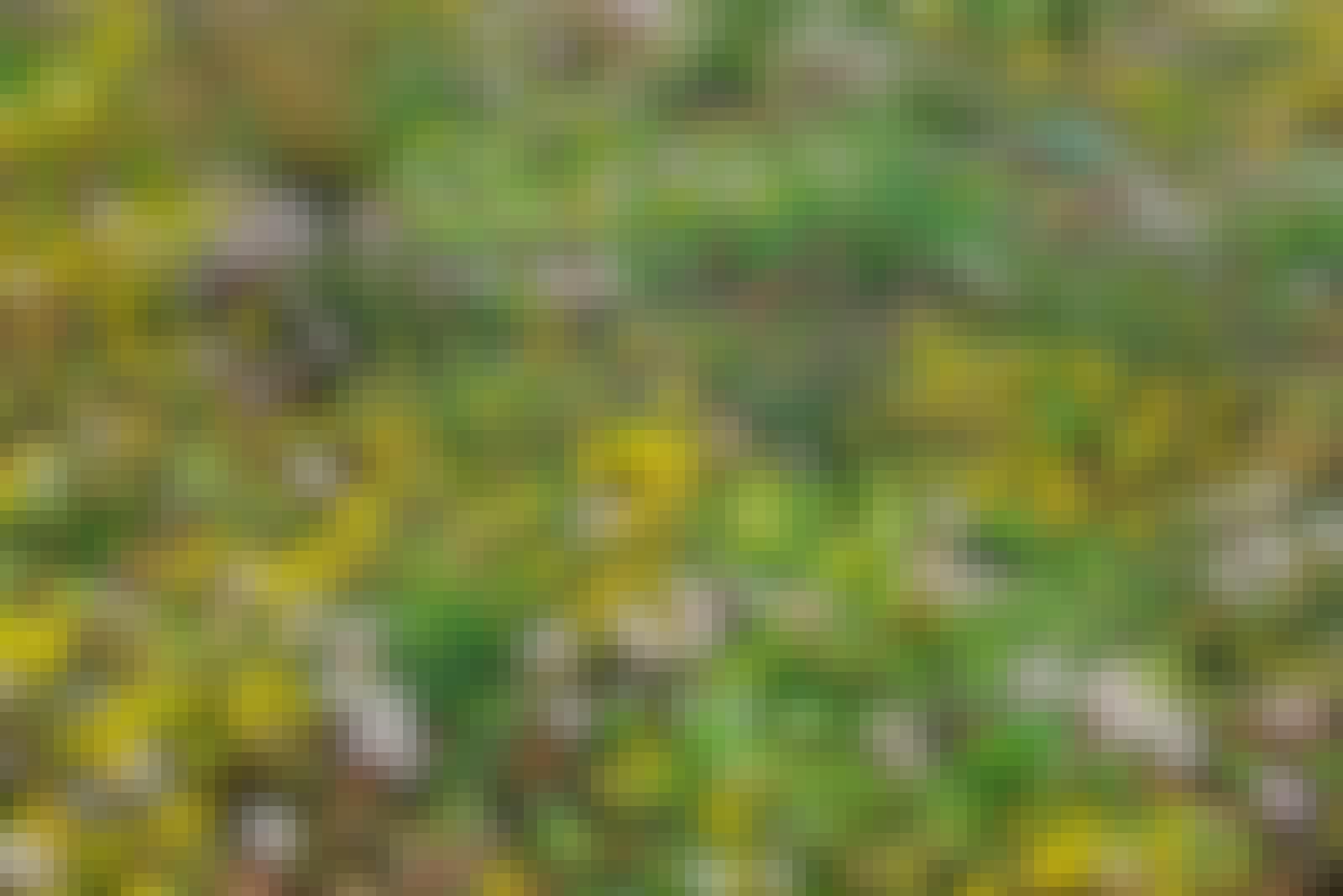 Erilaisia kasveja