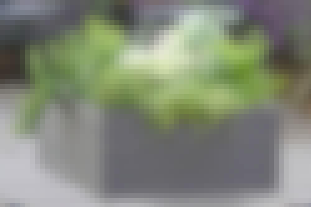 Komposittrall högbäddar och blomlådor