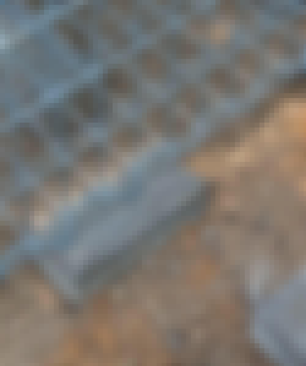 Gabion: Burene settes på betongstein.