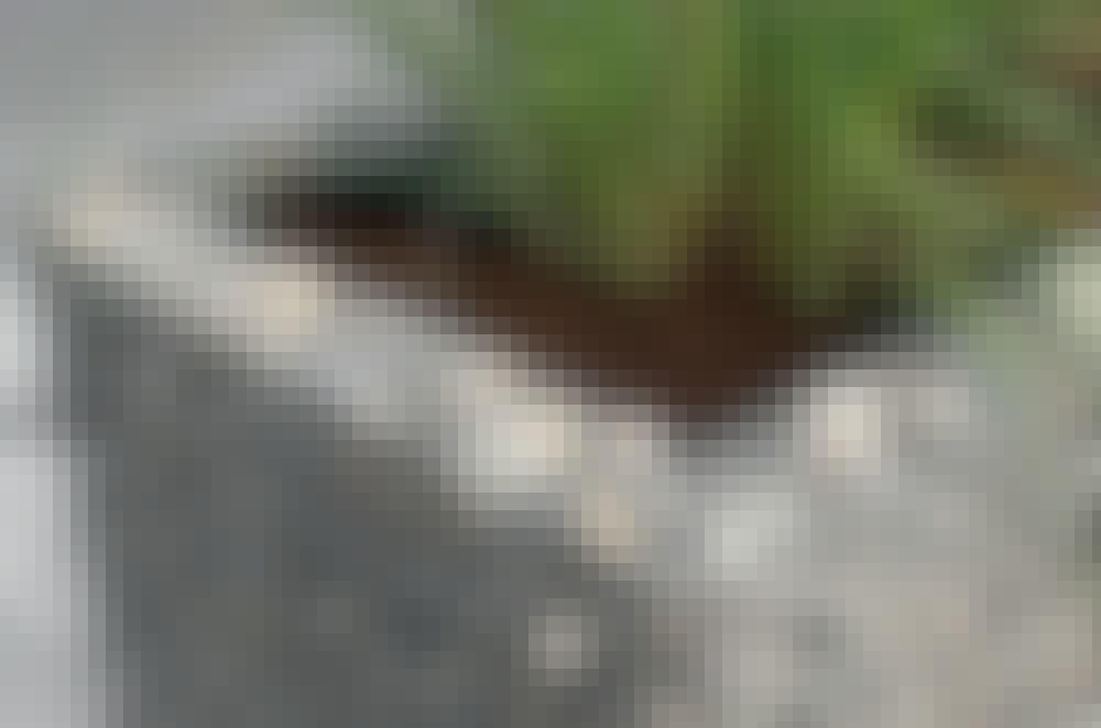 Kivikori: Tässä kivikoriaitaa käytetään
